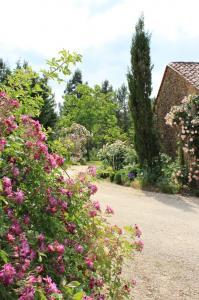 Jardin de leone haute 262 1045 x 1568